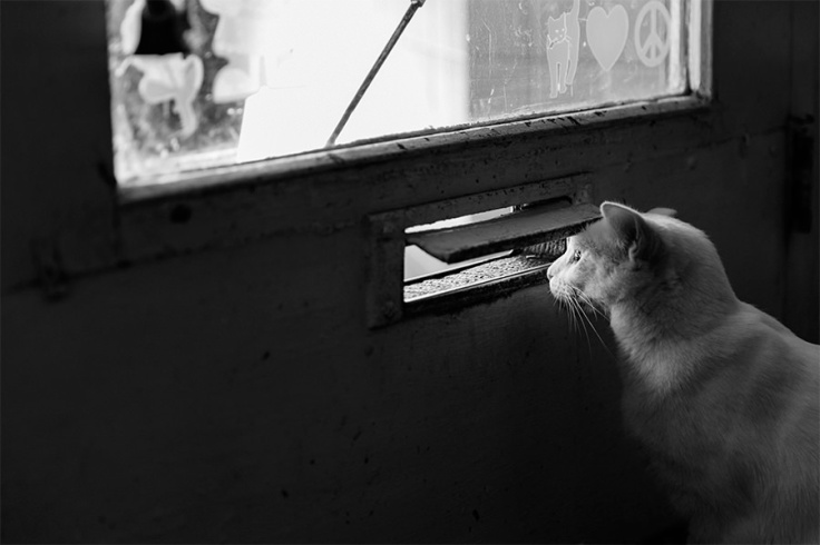 Kitty Mail Slot