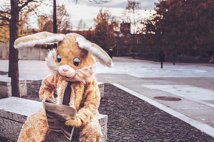 bunny-reading-newspaper