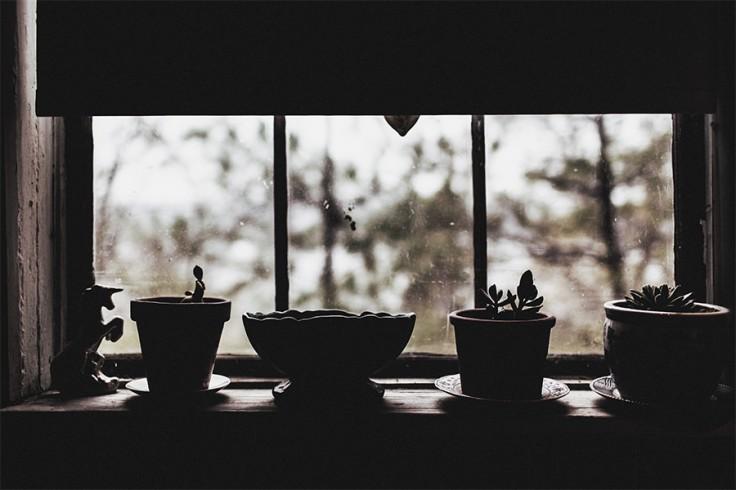 plants-in-window
